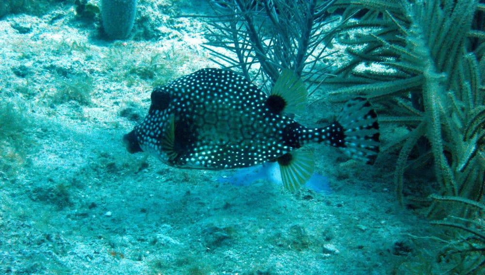 Isla Catalina Snorkeling Punta Cana