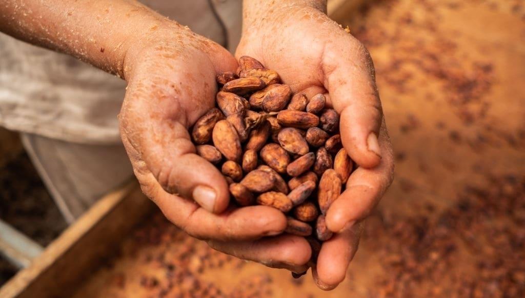 punta cana cacao