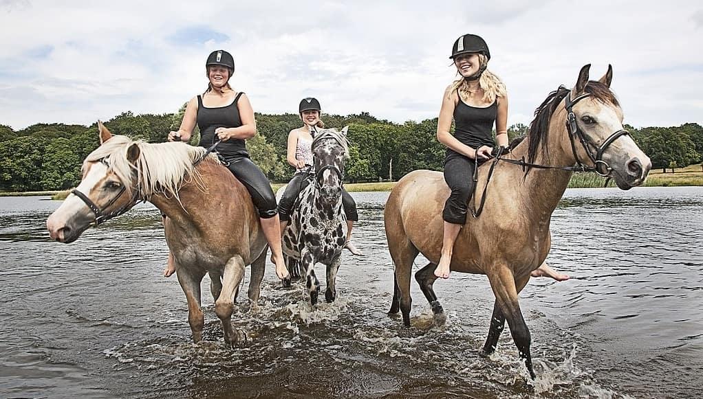 punta cana horses